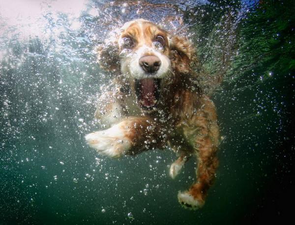 underwater-dog-10
