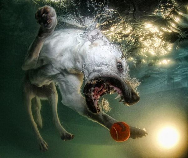 underwater-dog-6