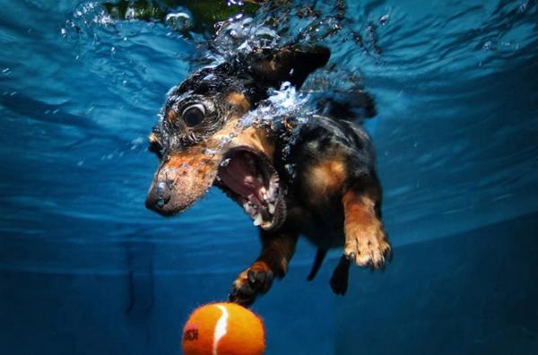 underwater-dog-7
