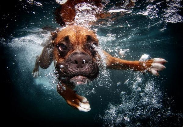 underwater-dog-9